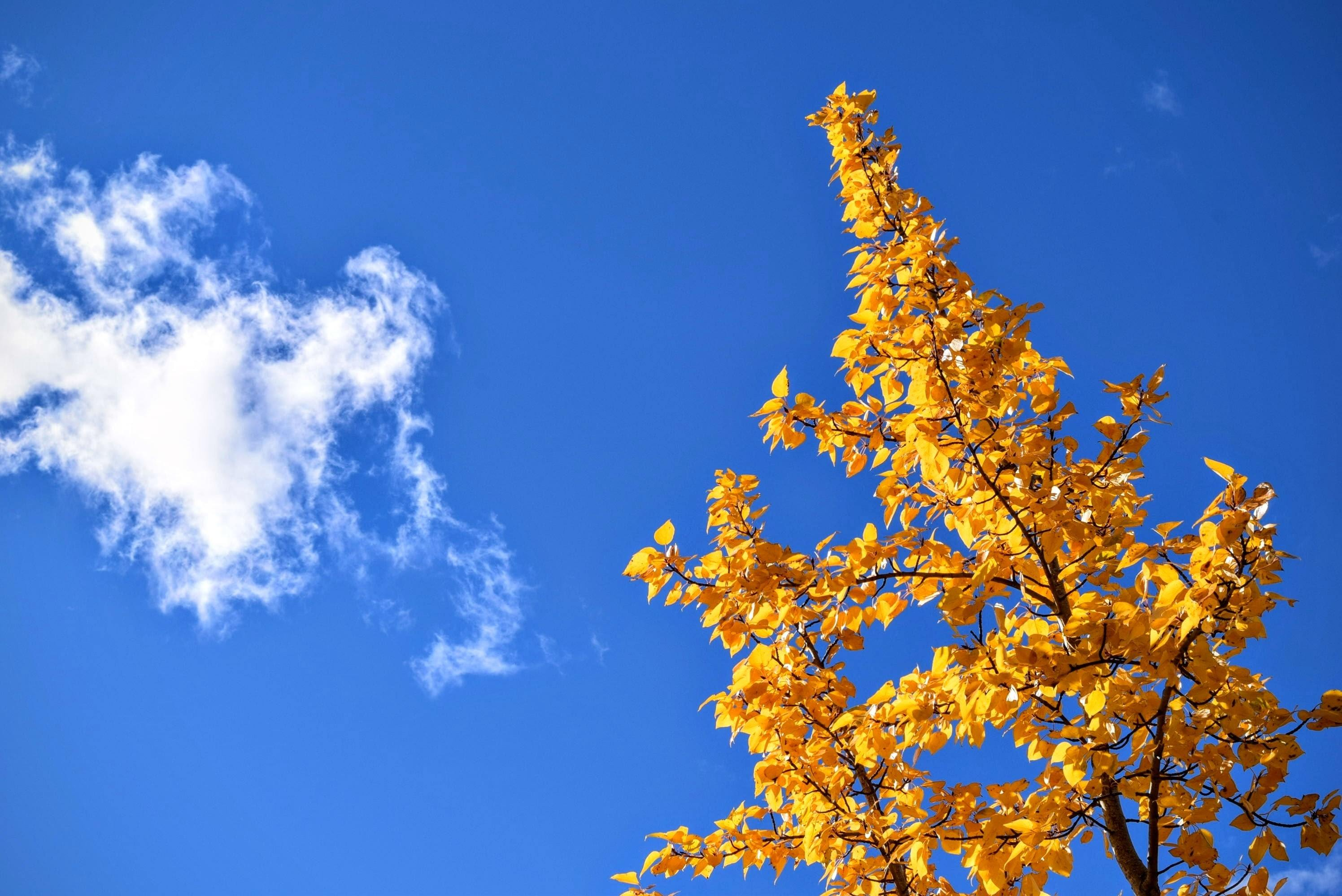 autumn-cloud-leaves-26062