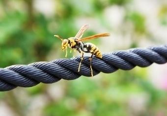 蜂の巣 駆除 料金
