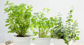 potted-herb-planters_コピー_コピー