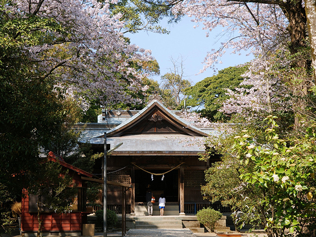 Shrine eda